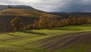 Montalcino im Herbst