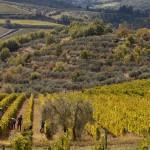 Manzano, Weinernte